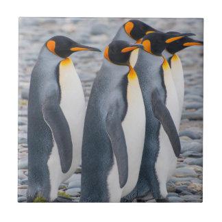 South Georgia. King penguins Tile