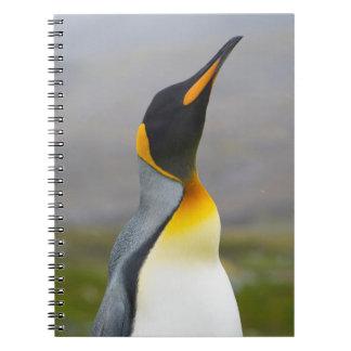 South Georgia. Saint Andrews. King penguin 2 Note Books