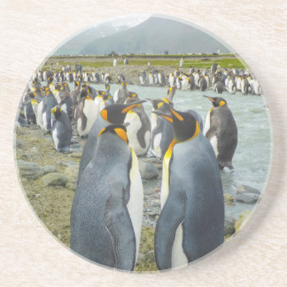 South Georgia. Saint Andrews. King penguin 6 Coaster