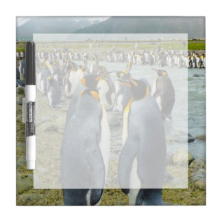 South Georgia. Saint Andrews. King penguin 6 Dry Erase Board