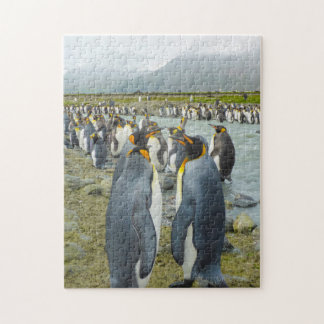 South Georgia. Saint Andrews. King penguin 6 Jigsaw Puzzle