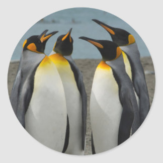 South Georgia. Saint Andrews. King penguins 8 Round Sticker