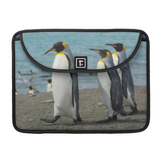 South Georgia. Saint Andrews. King penguins 9 Sleeve For MacBook Pro