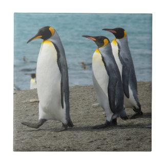 South Georgia. Saint Andrews. King penguins 9 Tile