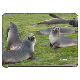 South Georgia. Salisbury Plain. Antarctic fur 1