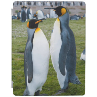 South Georgia. Salisbury Plain. King penguins 2 iPad Cover