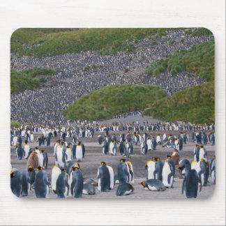 South Georgia. Salisbury Plain. King penguins 4 Mouse Mat