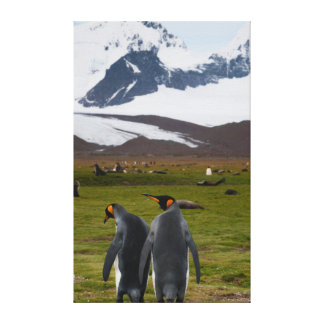 South Georgia. Salisbury Plain. King penguins 5 Canvas Print