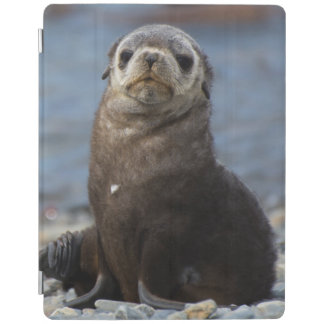 South Georgia. Stromness. Antarctic fur seal 2 iPad Cover