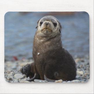 South Georgia. Stromness. Antarctic fur seal 2 Mouse Pad