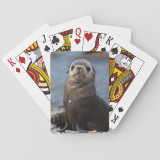 South Georgia. Stromness. Antarctic fur seal 2 Playing Cards