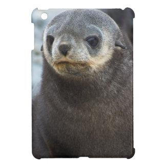 South Georgia. Stromness. Antarctic fur seal 3 Case For The iPad Mini