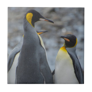 South Georgia. Very tall King penguin Tile