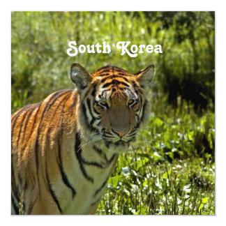 South Korean Tiger 13 Cm X 13 Cm Square Invitation Card