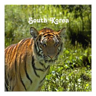 South Korean Tiger Announcements