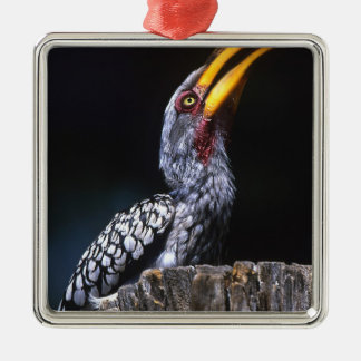 South Kruger National Park. Yellow-billed Christmas Ornament