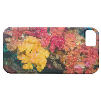 South Pacific, Fiji, Rainbow Reef in Taveuni Barely There iPhone 5 Case