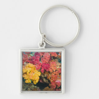 South Pacific, Fiji, Rainbow Reef in Taveuni Key Ring