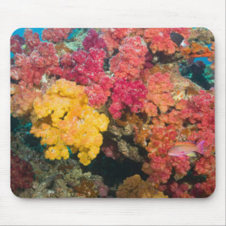 South Pacific, Fiji, Rainbow Reef in Taveuni Mouse Mat
