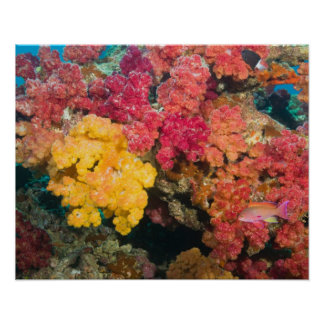 South Pacific Fiji Rainbow Reef in Taveuni Posters