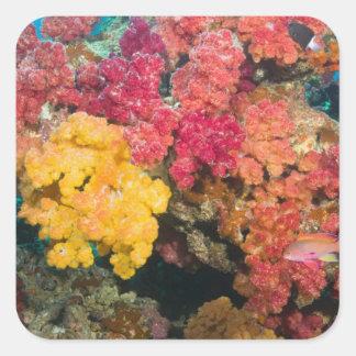 South Pacific, Fiji, Rainbow Reef in Taveuni Square Sticker