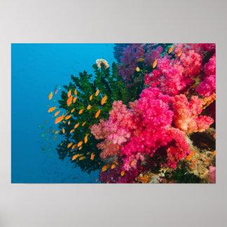 South Pacific, Fiji, Viti Levu, Bligh Water, Poster