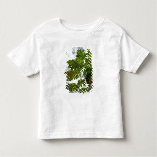 South Pacific, French Polynesia, Moorea. 2 Shirts