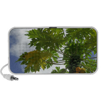 South Pacific, French Polynesia, Moorea. 2 iPhone Speaker