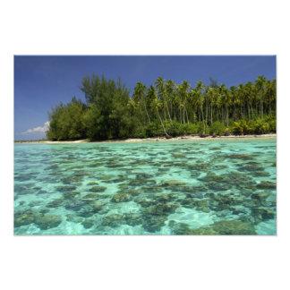 South Pacific, French Polynesia, Moorea 3 Art Photo