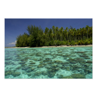 South Pacific, French Polynesia, Moorea 3 Poster
