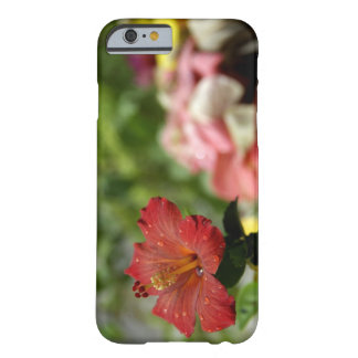 South Pacific, French Polynesia, Society 2 Barely There iPhone 6 Case
