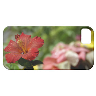 South Pacific, French Polynesia, Society 2 iPhone 5 Cases
