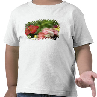 South Pacific, French Polynesia, Society 2 T-shirts