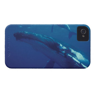 South Pacific, Tonga. humpback whale and calf iPhone 4 Case