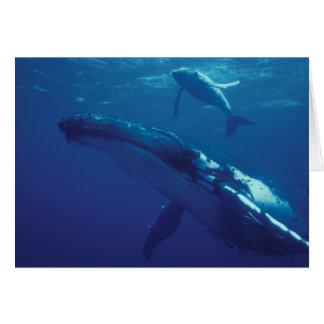 South Pacific, Tonga. humpback whale and calf Greeting Card