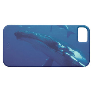 South Pacific, Tonga. humpback whale and calf iPhone 5 Cases