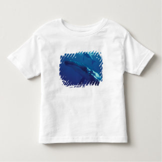 South Pacific, Tonga. humpback whale and calf T Shirt