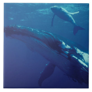 South Pacific, Tonga. humpback whale and calf Tile
