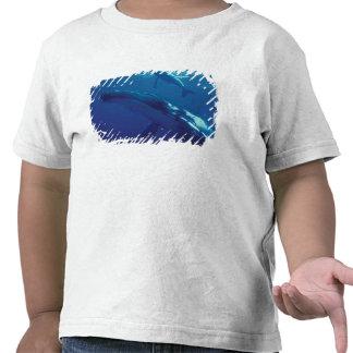 South Pacific, Tonga. humpback whale and calf T Shirts