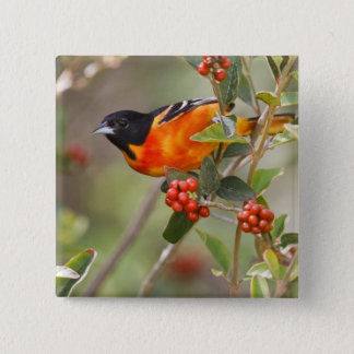 South Padre Island, Texas, USA, Baltimore Oriole 15 Cm Square Badge