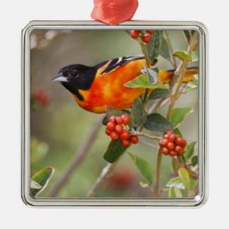 South Padre Island, Texas, USA, Baltimore Oriole Christmas Ornament