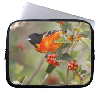 South Padre Island, Texas, USA, Baltimore Oriole Computer Sleeve