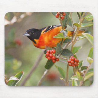 South Padre Island, Texas, USA, Baltimore Oriole Mouse Mat