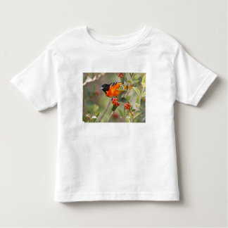 South Padre Island, Texas, USA, Baltimore Oriole Toddler T-Shirt