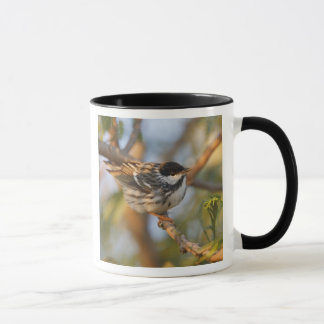 South Padre Island, Texas, USA, Blackpoll Mug