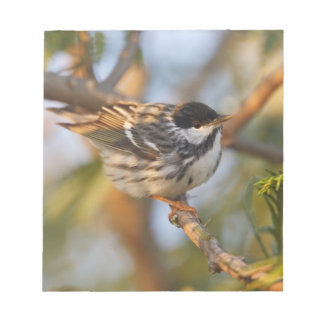 South Padre Island, Texas, USA, Blackpoll Notepad