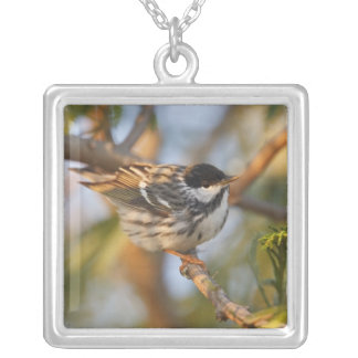 South Padre Island, Texas, USA, Blackpoll Silver Plated Necklace