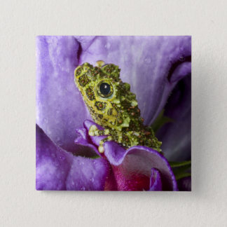 Southeast Vietnam. Close-up of mossy tree frog 15 Cm Square Badge