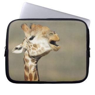 Southern African giraffe (Giraffa camelopardalis Computer Sleeve