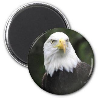 Southern Bald Eagle 6 Cm Round Magnet